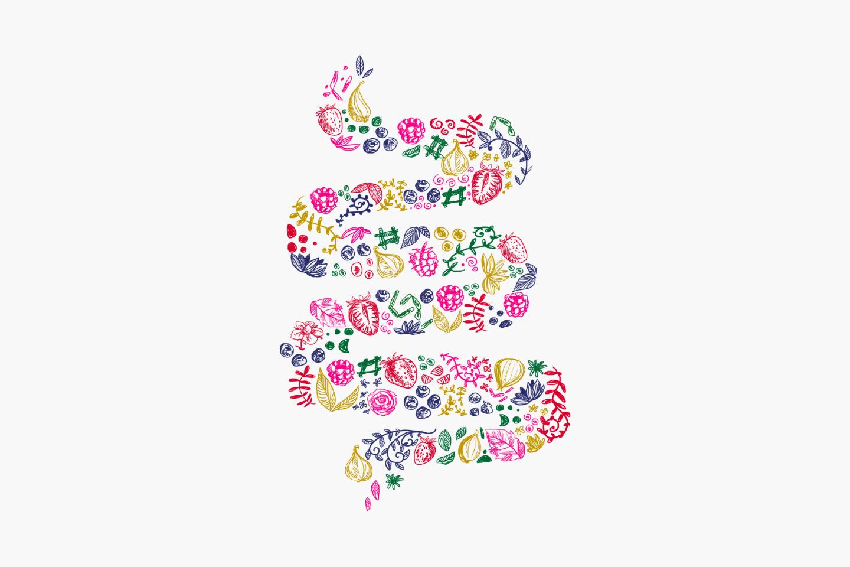 Le déséquilibre de la flore intestinale : causes et symptômes